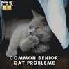 Common Senior Cat Health Problems