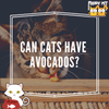 Can Cats Have Avocados?