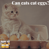 Safe or Not: Can Cats Eat Eggs Without Having Any Problems?