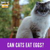 Are Eggs Good For My Cat's Health?