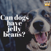 Can Dogs Have Jelly Beans?
