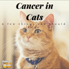All you Need to Know About Cancer in Cats