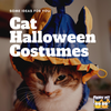 Meowloween! Cat Costume Inspiration Needed