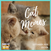 Cat Memes: September Edition