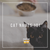 Cat Names 101: Here's a Look at Some Cat Names!