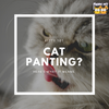 Cat Panting? Here's What It Means.