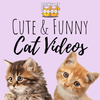 Funny and Cute Cat Videos