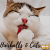 About Hairballs and Cats