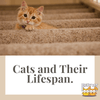 Cats and Their Lifespan