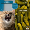 Cats vs Pickles: What's the Story?