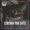 All You Need to Know About Cerenia for Cats