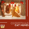 2020 Christmas Edition: Cat Memes