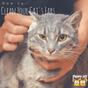 A Quick Guide: How to Clean Cats Ears?