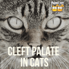 A Quick Look into Cleft Palate in Cats