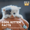 Cool Kitten Facts
