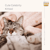 Adorable Celebrity Kitties