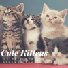 Cute Kittens for Days!