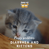 Poopy Problems: Diarrhea and Kittens