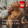 A Quick Look: Diatomaceous Earth For Cats