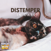 All You Need to Know About Distemper in Cats