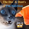 The Dos and Don'ts of Cat Nutrition