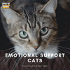 Emotional Support Cats: Here's What You Should Know