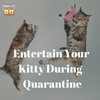 How to Entertain Your Kitty During COVID-19 Quarantine