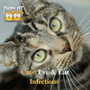 Cats' Eye & Ear Infections