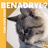 Here's the Deal: Can Cats Take Benadryl?