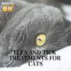 Buying Guide: Flea and Tick Treatments for Cats