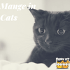 Causes, Symptoms, and Treatment: What Is Mange In Cats?