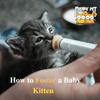 How to Foster a Baby Kitten