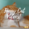 Funny Cat Videos to Make Your Day