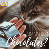Can I Give My Cat Chocolate?