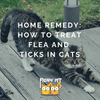 Home Remedy: How to Treat Flea and Ticks in Cats