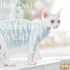 How Do I Put Clothes on My Cat?