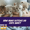 How Many Kittens Do Cats Have?