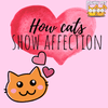 Cats and Affection: Ways in Which Your Kitty Tells You She Loves You!