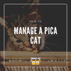 Amber from Team FreakyPet on How to Manage a Pica Cat