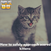 Scared Kittens: How to Safely Approach Them