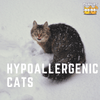 Hypoallergenic Cats That Can Keep Your Allergy At Bay!
