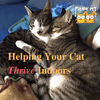 Helping Your Cat Thrive Indoors