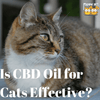 A Quick Look: Is CBD Oil for Cats Effective?