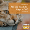 Are You Ready to Adopt a Cat?
