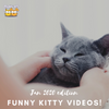 January 2020 Edition: Funny Cat Videos
