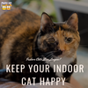 Indoor Cats Live Longer! Here's How to Keep Your Indoor Cat Happy