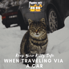 Keep Your Kitty Safe When Traveling Via a Car