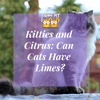 Kitties and Citrus: Can Cats Have Limes?