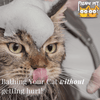 How to Bathe Your Cat WITHOUT Bloodshed