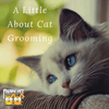 A Little About Cat Grooming